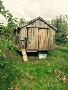 Thanx Ivan and Peter for renovating this old hen shed we found on the farm .. No place like home for the chicks!