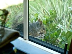 A frequent visitor. 2016 -Katy Silb