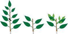 How to prune bonsai? - by Ma-Ke Bonsai on Bonsai Care Guide