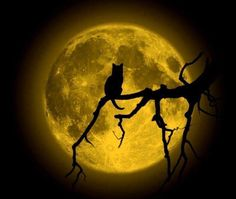 Black Cat Silhouette against full moon Moonscape, Beautiful Moon, Moon, Photo, Shoot The Moon, Moon Pictures, Cat Art, Moonlight, Art
