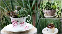 Dream State: DIY Succulent Projects