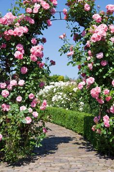 Vertical Rose Gardening 30 Ways to Incorporate Roses into Your Backyard Home Ways To Incorporate Roses Into Your Backyard Home How To Create A Garden Arch Garden Design Ideas