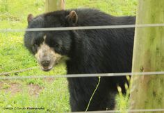 Speckled Bear