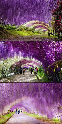 Fascinating Look at the Wisteria Flower Tunnel in Japan - TechEBlog