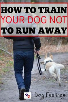 How To Train Your Dog To Not Run Away https://dogfeelings.com/how-to-train-your-dog-not-to-run-away/