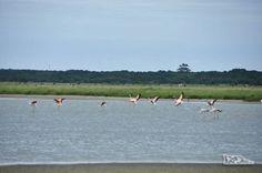 Grupo de flamingos no Parque Nacional da Lagoa do Peixe, no sul do Rio Grande do Sul, entre a Lagoa dos Patos e o Oceano Atlântico