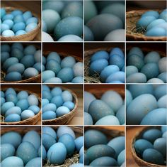 Ostereier natürlich färben mit Rotkohl