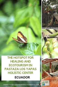 The hotspot for Healing & Ecotourism in Pastaza: Los Yapas Holistic Center - Visit Ecuador and South America Holistic Center, South America, Latin America, Spanish Speaking Countries, Just Dream, Amazon Rainforest, Galapagos Islands, How To Speak Spanish, Holistic Healing