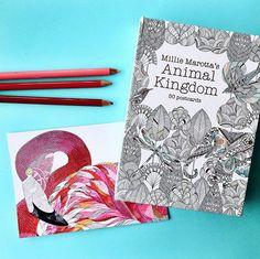 Animal Kingdom Postcards with Color Pencils | ShopPigment
