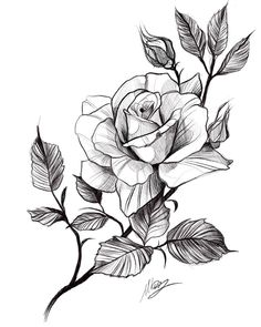 Rose Drawing Tattoo, Flower Art Drawing, Flower Sketches, Floral Drawing, Tattoo Design Drawings, Pencil Art Drawings, Art Drawings Sketches, Tattoo Sketches, Rose Sketch