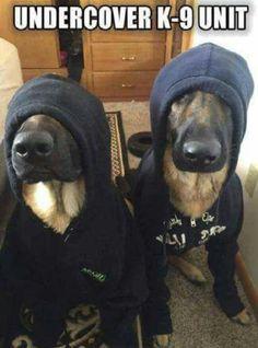 HaHa!  Undercover K-9 Unit
