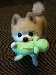 This isn't a plushy? Truly?  It's a real puppy. Gush.