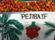 """""""Pejibayes"""" are the starchy fruit of a palm tree.  They are boiled, then cut open and enjoyed with a dollop of mayonnaise."""
