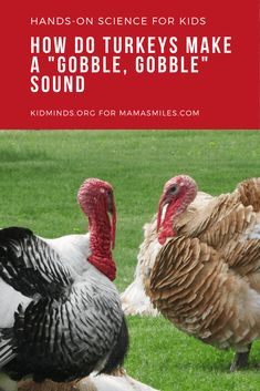 "How do turkeys make their signature ""gobble, gobble"" sound? Here's an activity to teach some Thanksgiving science through hands-on learning! Thanksgiving Activities For Kids, Science Activities For Kids, Preschool Science, Hands On Activities, Baby Activities, Science Lessons, Science Experiments, Sound Science, Easy Science"