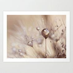 dandelion  Art Print by ingz - $18.00