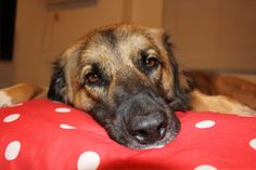 Dealing with Separation Anxiety, dogs