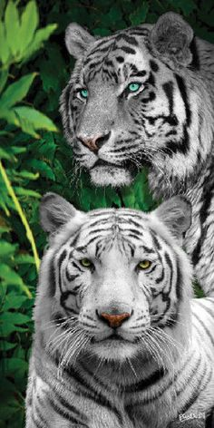 New Orange Bengal Jungle Tigers Bath Pool Beach Towel Gift Big Cats Tiger Family