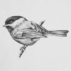 Fresh WTFDotworkTattoo Find Fresh from the Web Little dottwork bird for my friend  #dotwork #stippling #stipple #blackwork #bird #birddrawing #drawing #pencildrawing #illustration #art #blackandgrey #tattoo #tattooapprentice cheri_may WTFDotWorkTattoo
