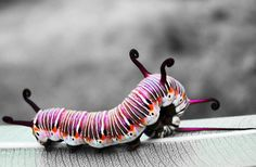 Sometimes the beauty it's already on the caterpillar...