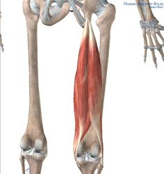 Working With Sit Bone Pain and Achy Hamstrings - Yoga Anatomyhttp://www.dralexjimenez.com/pulled-hamstring-muscle/