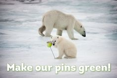 Polar bears REALLY want Pinterest to go green since using dirty energy like coal and gas for its data centers threatens the Arctic and polar bear habitat.  TAKE ACTION NOW & ask Pinterest to go green!  http://www.greenpeace.org/usa/clickclean/#act #clickclean