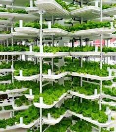 To grow one million heads of lettuce using conventional agriculture methods in the US requires either 16 acres of land in the Northern states, 8 acres of land in the Southern states, or acres in a traditional hydroponic greenhouse operation. Vancouver-b Plantador Vertical, Vertical Farming, Vertical Planter, Vertical Gardens, Hydroponics System, Hydroponic Gardening, Farming System, Sustainable Gardening, Urban Gardening