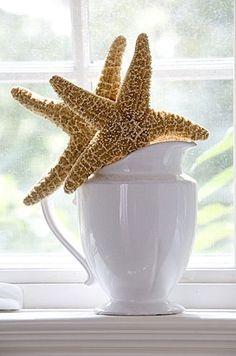 Starfish in ironstone / fresh cottage
