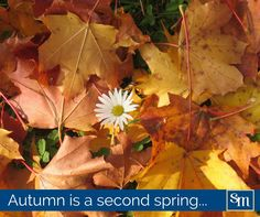 """""""Autumn is a second spring when every leaf is a flower. Albert Camus, Healing, Leaves, Autumn, Spring, Flowers, Plants, Quotes, Nature"""