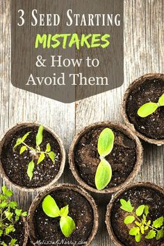 3 Common Seed Starting Mistakes & How to Avoid Them | Melissa K. Norris