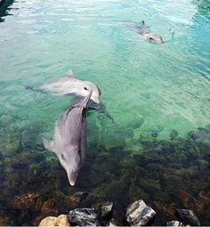 Love dolphins 🐬 dolphins make life today good : ) Cute Creatures, Sea Creatures, Beautiful Creatures, Animals Beautiful, Animals And Pets, Baby Animals, Cute Animals, Wale, Marine Life