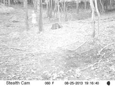 A motion-triggered hunting camera captured the image of this little girl running through the woods. At the other end of the frame is what looks like a man following her.