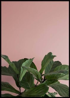 Here you will find floral prints and posters. Stylish posters with botanical prints of colorful plants. Buy botanical posters online from Desenio. Plant Aesthetic, Aesthetic Images, Desert Aesthetic, Photo Wall Collage, Picture Wall, Plant Wallpaper, Green Theme, Colorful Plants, Pink Wall Art