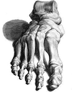 skeleton foot