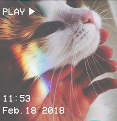 M O O N V E I N S 1 0 1        #vhs #aesthetic #rainbow #cat #hand #whiskers