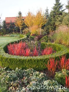 Marzenia i plany vs. rzeczywistość - strona 333 - Forum ogrodnicze - Ogrodowisko