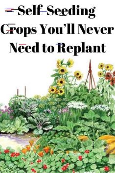 Self-Seeding Crops You'll Never Need to Replant Some crop plants are self-seeding. With a bit of light management each generation can be coaxed into providing seeds season after season. Gardening Supplies, Gardening Hacks, Gardening Quotes, Organic Vegetables, Growing Vegetables, Organic Herbs, Organic Fruit, Growing Plants, Fall Plants
