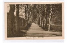 Deutsches Reich Ansichtskarte Ostpreußen Cranz Birkenallee ungelaufen ca. 1920