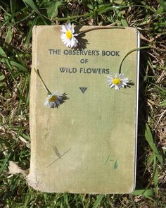 They were wild flowers. Silly little wild flowers that argued and danced around each other and tried to twine. Bastet, Flora Und Fauna, This Is A Book, Mellow Yellow, In This World, Book Worms, Wild Flowers, Pretty Flowers, Blue Flowers