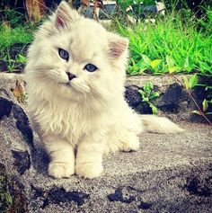 A friend posted this pic - cutest kitty ever.