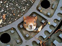20-adorables-photos-d-ecureuils-9 20 adorables photos d'écureuils