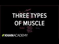 This is a helpful video in summarizing the entirety of the autonomic