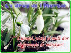 Drag, Parsley, Herbs, Plants, Herb, Plant, Planets, Medicinal Plants