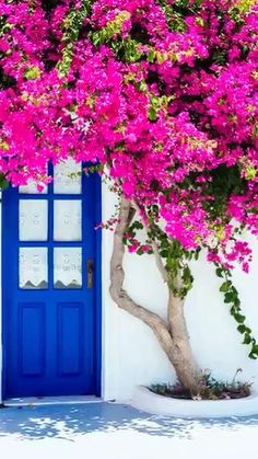 What does your Bougainvillea need? House Plants Decor, Plant Decor, Tiny White Flowers, Beautiful Flowers, Beautiful Gardens, Beautiful Landscapes, Garden Pond Design, Flower Factory, Evergreen Vines
