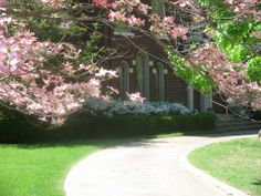 Celebrate your gardens this Earth Day. Tulsa's dogwoods are more beautiful than ever this year!