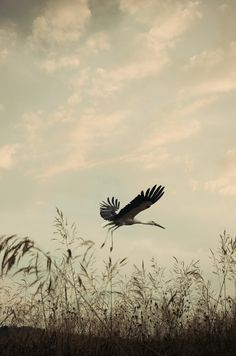 Flying Stork by Adrian Limani on 500px