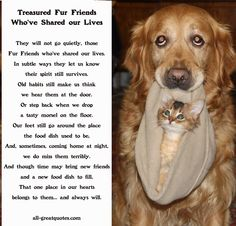 Memorial Cards For Pets - They will not go quietly, those Fur Friends who've shared our lives. In subtle ways they let us know their spirit still survives. Old habits still make us think, we hear them at the door. Or step back when we drop, a tasty morsel on the floor. Our feet still go around the place, the food dish used to be, and, sometimes, coming home at night, we miss them terribly. And although time may bring new friends and a new food dish to fill, That one place in our hearts, ...