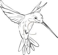 hummingbird outline - Google Search