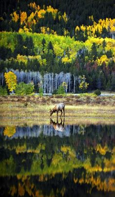 Rocky Mountain National Park, Grand Lake's backyard is named one of National Geographic's Best! www.denverpost.co...