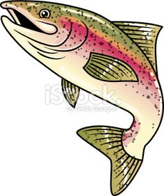 rainbow trout stock vector art 11052440 - iStock