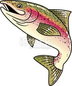 rainbow trout stock vector art 11052440 - iStock